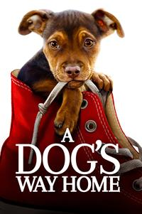 A Dog's Way Home - Now Playing on Demand
